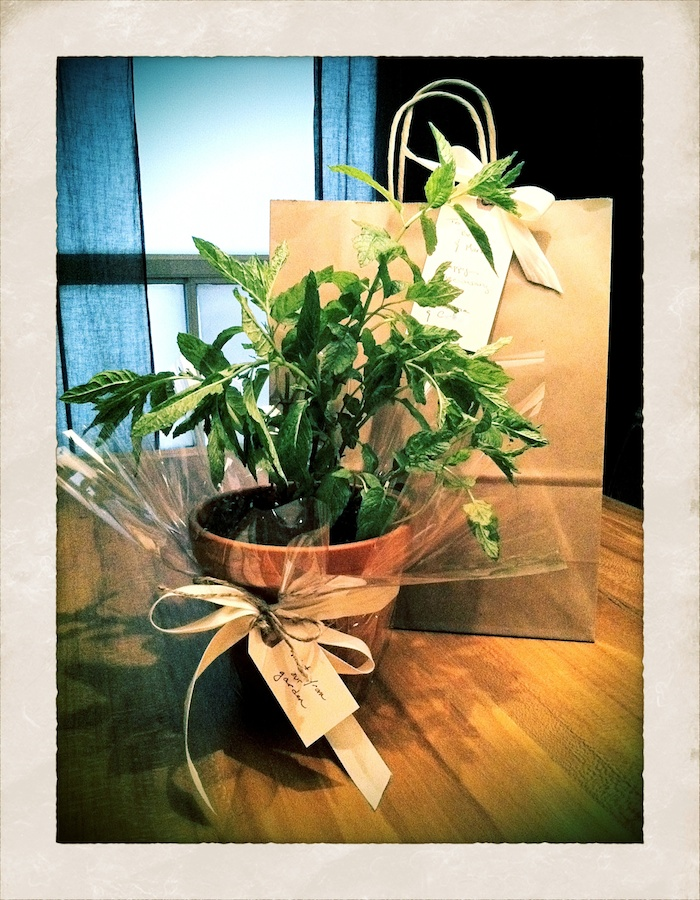planthousewarminggift Best Housewarming Plant on best sympathy plant, best food plant, best good luck plant, best type of gift to give as a plant, best coffee plant, best roses plant,