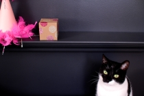 Glitter-Dot Box with cat